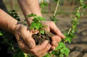 transplanting_seedlings_s2